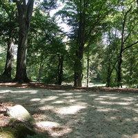 Wald Roggosen