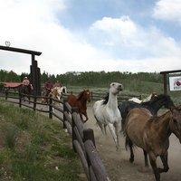 Heart Six Guest Ranch